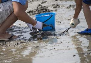 潮干狩りと麻痺性貝毒